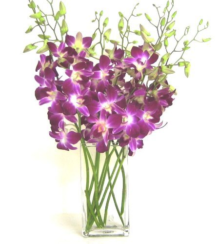Fresh Cut Purple Dendrobium Orchids with Vase