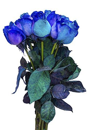 12 Stems – Fresh Cut Blue Lollipop Roses from Flower Explosion