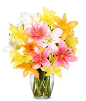 12 Stem Assorted Asiatic Lily Bunch (Usa Only) – Eshopclub Online Flowers – Wedding Flowers Bouquets – Birthday Flowers – Send Flowers – Flower Delivery – Flower Arrangements – Floral Arrangements – Flowers Delivered – Sending Flowers