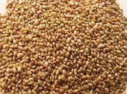 5# Pound of Alfalfa Seed From the Dirty Gardener by The Dirty Gardener