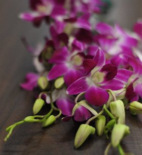 6-Stem Dendrobium Orchid Sprays – Premium Tropical Hawaiian Flowers