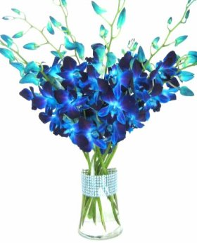 Just Orchids – Blue Dendrobium Orchids with Vase w/ Rhinestone Ribbon