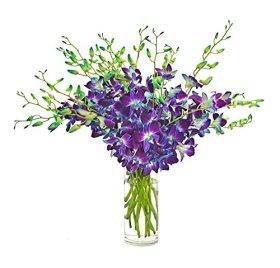 Fresh Cut Flowers -Dendrobium Blue Orchids -Bom Sonia(Free Vase)
