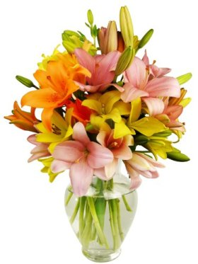 12 Stem Assorted Asiatic Lily Bunch – With Vase