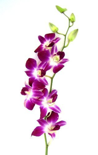 Mother's Day Purple Orchid with Vase