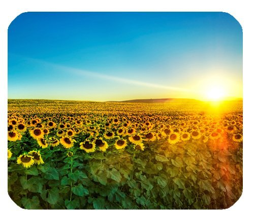 Nature Sunflowers field Sunrise Sunshine blue sky Customized Rectangle Mousepad