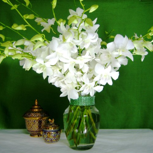 Fresh Flowers – 20 Just Orchids White Dendrobium with Vase