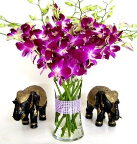 Fancy Flowers (Usa Only) – Jazi Purple Dendrobium Orchids with Vase – Eshopclub Online Fresh Flowers – Wedding Flowers Bouquets – Birthday Flowers – Send Flowers – Flower Arrangements – Floral Arrangements – Flowers Delivered
