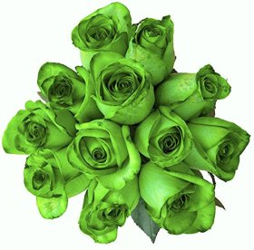 24 Stems – Fresh Cut Tinted Green Roses from Flower Explosion