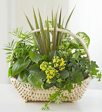 1-800-Flowers – Thinking of You Dish Garden – Large