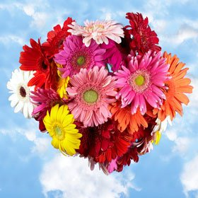 Beautiful Assorted Gerbera Flowers | 135 Gerberas Flowers Assorted Colors