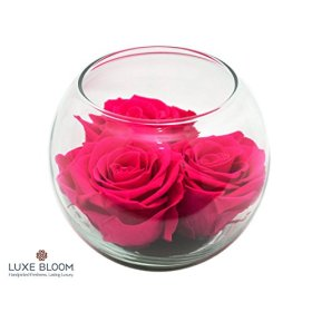 Luxe Bloom Sangria Preserved Roses | Lasts 60 days | Gorgeous Spring Flowers | 3 sangria (hot pink) roses & greens in a 4″ glass bubble | Perfect gift for Mother's Day or any occasion