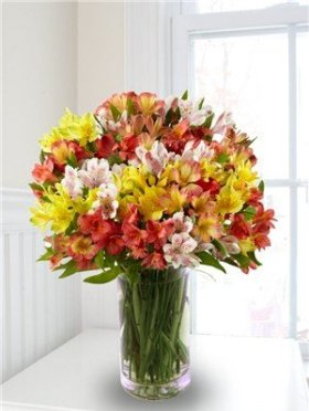 Alstromeria Peruvian Lilies (100+ Blooms with a Free Vase)
