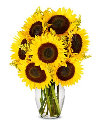 From You Flowers – Stunning Sunflowers (Free Vase Included)