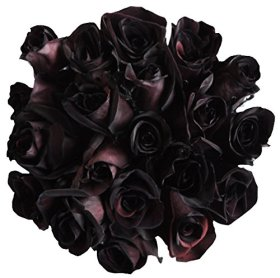 12 Stems – Fresh Cut Black Roses from Flower Explosion