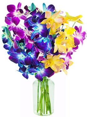 Kabloom 10 Stems Honeymoon with Blue/Fuchsia and Yellow Orchids with Vase, 2.5 Pound