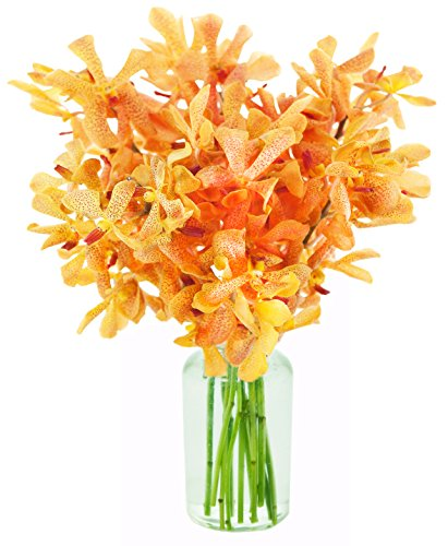 Sunset Serenade with Golden Mokara Orchids (10 Stems) – With Vase