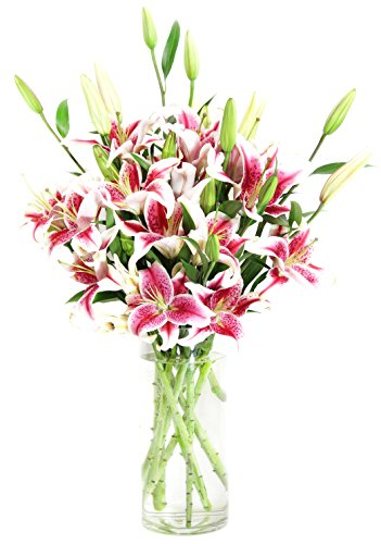 Stargazer Lily Bouquet (8 stem, 20 blooms) – With Vase
