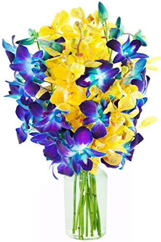 Starry Night with Blue and Yellow Orchids (10 Stems) – With Vase