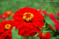 Flowers by Name-Z-Gallery-1