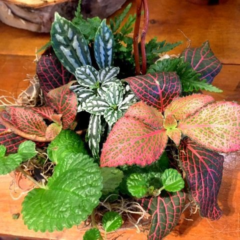 Fairy Plants!