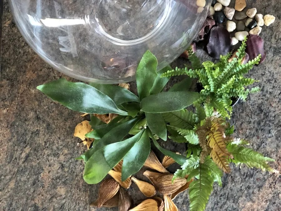 Easy DIY Fern Terrarium