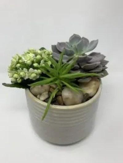 succulent planter