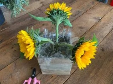 sunflowers in a triangle formation in chicken wire