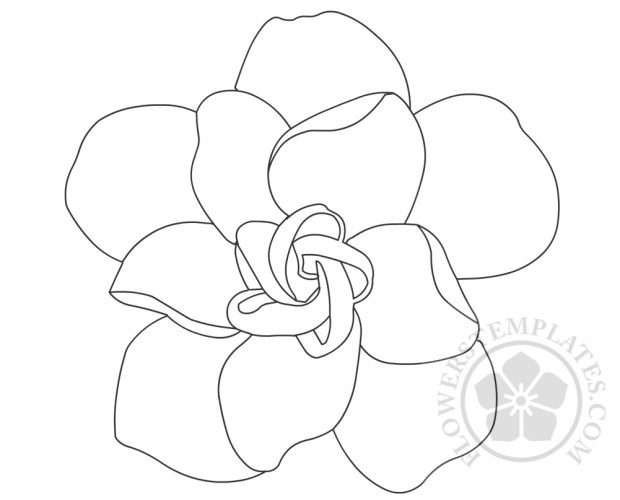Gardenia Flower Coloring Page Flowers Templates