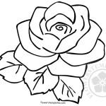 Black Rose Stylized