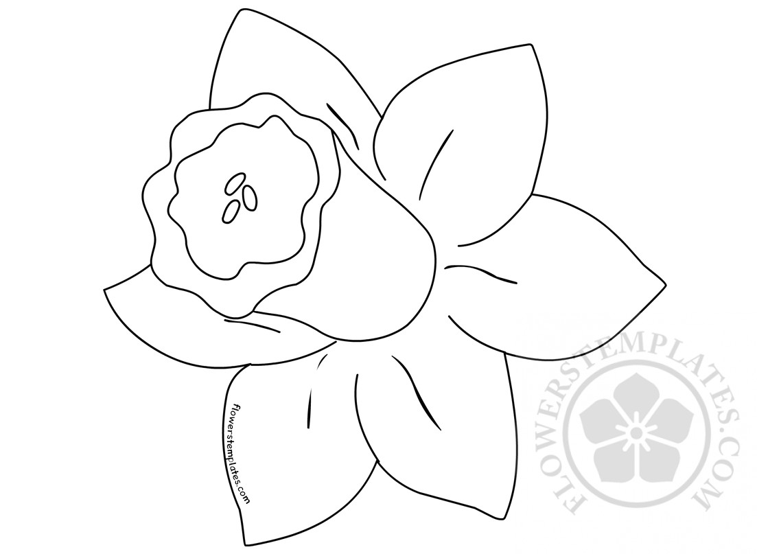 St davids day printables daffodil coloring page flowers templates