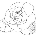 Rose flower and leaves