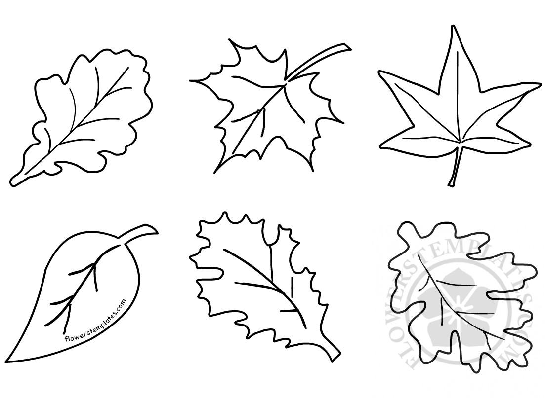 Autumn leaf shapes fall leaf   Flowers Templates