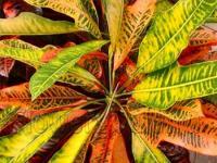 Какую температуру выдерживают растения