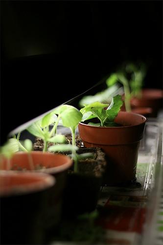 growlights at work by MissMessie via Flickr