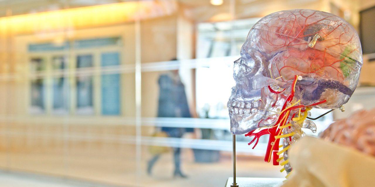 Healing my Brain After Cipro