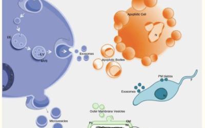 Ciprofloxacin Depletes Exosomal DNA