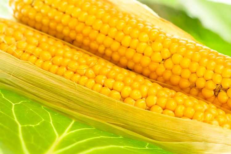 Homestead Corn on the Cob