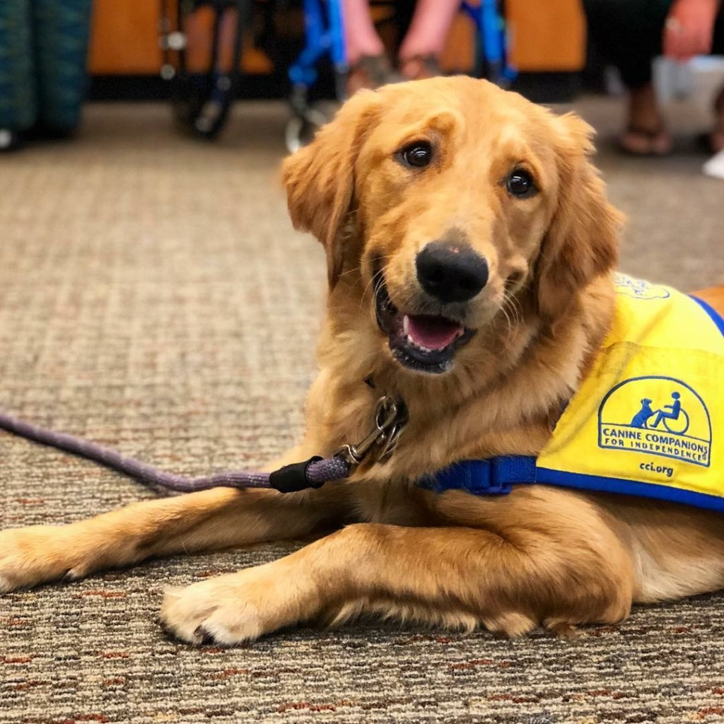 The Tail Waggin' Tutor! REGISTER for a 15 minute session between 11am and 12 pm on April 26