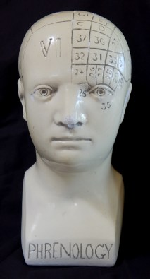 Phrenology Skull (front view)