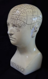 Phrenology Skull (side view)