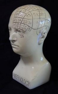 Phrenology Skull (side view)