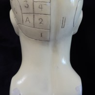 Phrenology Skull (back view)