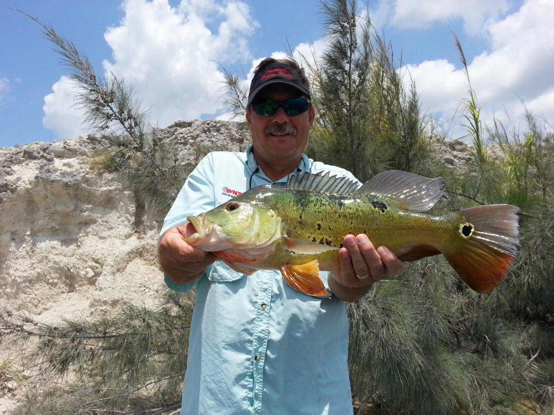 Big Florida Peacock bass