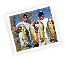 Questions and Answers for Peacock Bass Fishing