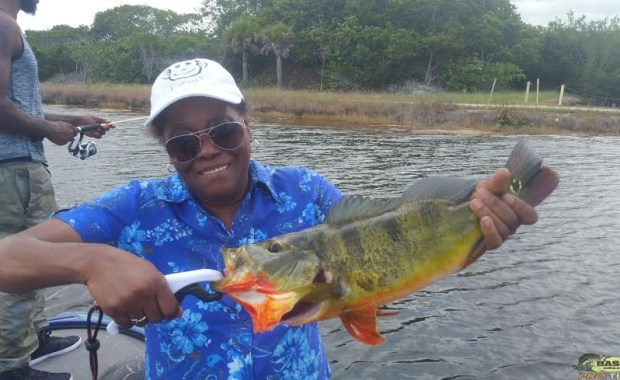 Clown knife Fish Caught in South Florida