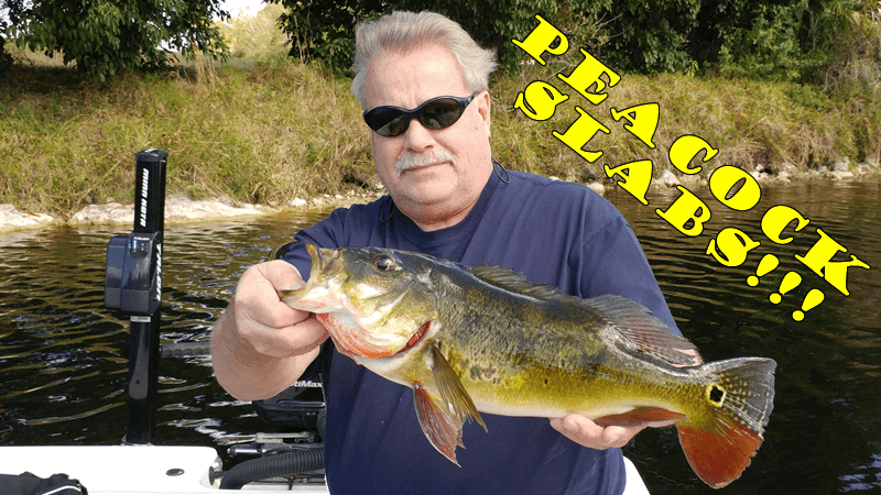 Naples Golden Gate Canal Largemouth & Peacock Bass Fishing