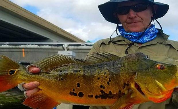 Miami Trophy Peacock Bass Fishing