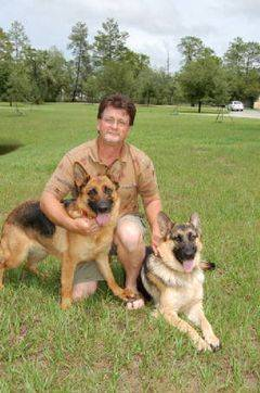 Ed and Tammy Rockhold's German Shepherds