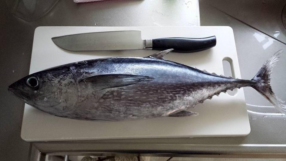 魚を捌けるようになって、食の選択肢が拡がった話